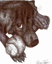 Puppy - Ballpoint Pen 2014